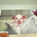 pig-news